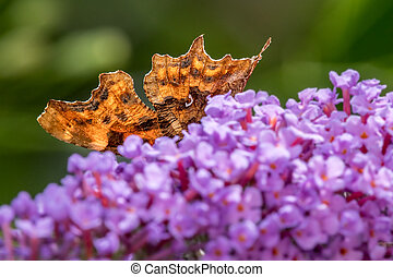 vlinder, abstract, komma