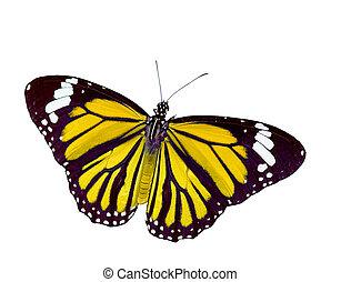 vlinder, actie