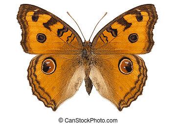 """vlinder, almana, junonia, pansy"""", """"peacock, soort"""