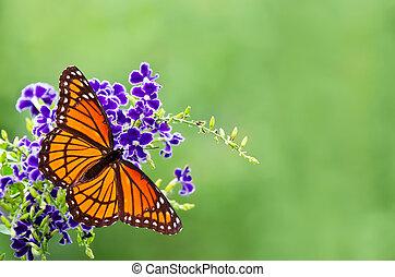 vlinder, blauwe bloemen, onderkoning