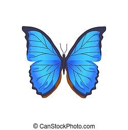 vlinder, blauwe , kleur, poster, illustratie, vector