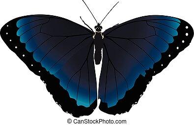 vlinder, blauwe , vector
