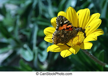 vlinder, bloem, &