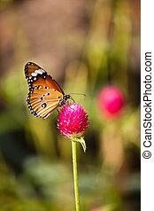 vlinder, bloem