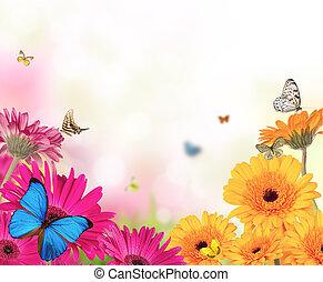 vlinder, bloemen, gerber