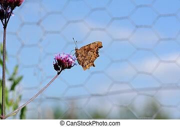 vlinder, c, onderscheidend, tekening, komma, gesloten, ...