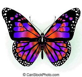 vlinder, colo, helder, vrijstaand