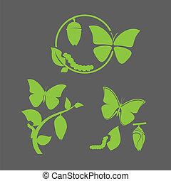 vlinder, cyclus