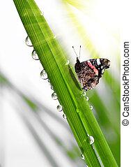 vlinder, dauw