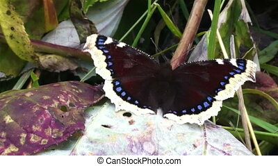 vlinder, dichtbegroeid boven, blad