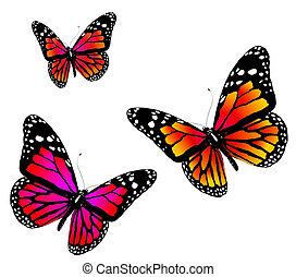 vlinder, drie