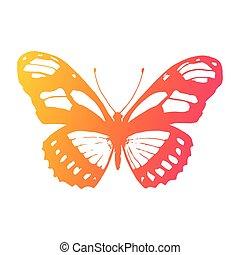 vlinder, element, achtergrond., vector, ontwerp, witte