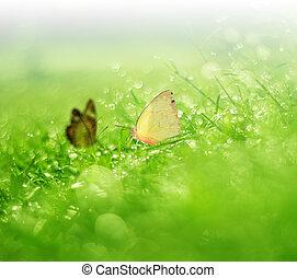 vlinder, fris, morgen, dauw