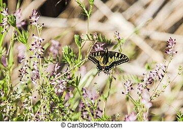 vlinder, graden