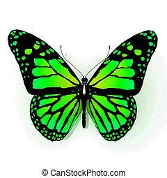 vlinder, groene, kleur