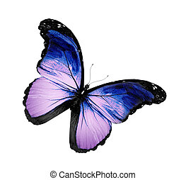 vlinder, grunge, vliegen, vrijstaand, viooltje, witte