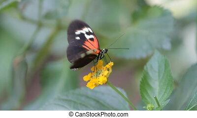 vlinder, in de tuin