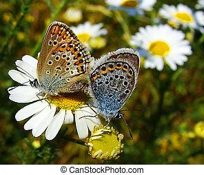 vlinder, in, de, weide