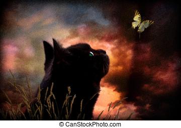 vlinder, kat