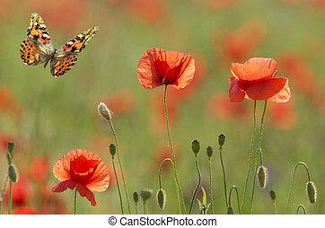 vlinder, klaprozen