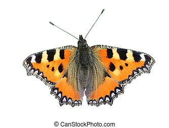 vlinder, -, kleine, tortoiseshell