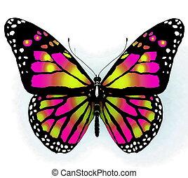 vlinder kleuren, helder