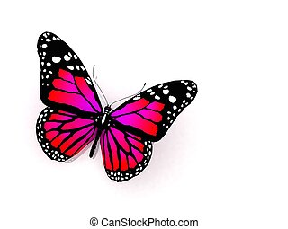 vlinder kleuren, karmozijnrood