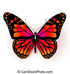 vlinder kleuren, sinaasappel