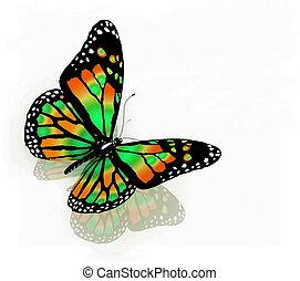 vlinder kleuren, vrijstaand, groene achtergrond, witte