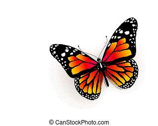 vlinder kleuren, vrijstaand, sinaasappel