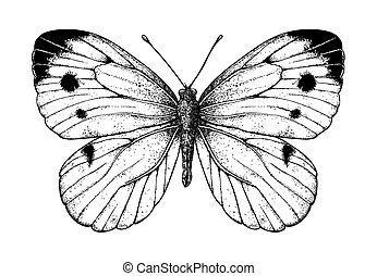 vlinder, kool, tekening