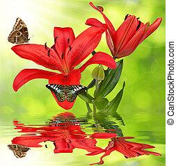 vlinder, lelie
