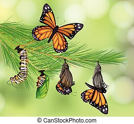 vlinder, leven, set, cyclus
