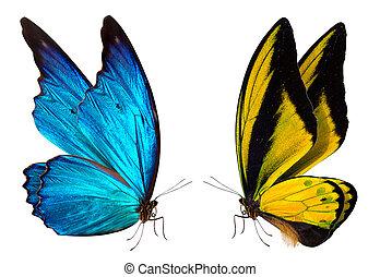 vlinder, macro, achtergrond