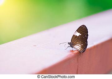 vlinder, mooi, nature., ondergaande zon , bos, zo