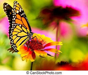 vlinder, mooi, vorst, bloem