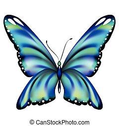 vlinder, mooi, vrijstaand, witte , blauwe