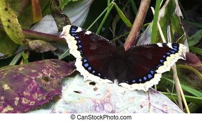 vlinder, op, blad, dichtbegroeid boven