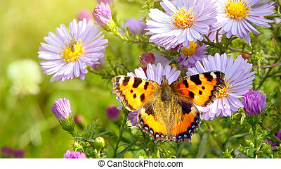 vlinder, op, bloemen