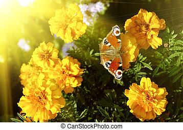 vlinder, op, gele bloemen
