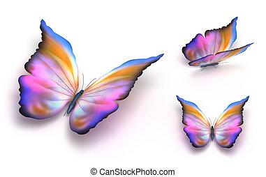 vlinder, op, witte , kleurrijke