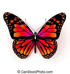 vlinder, oranje kleur