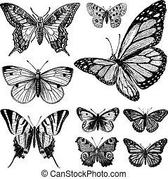 vlinder, ouderwetse , 2, set, vector