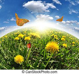 vlinder, paardebloemen