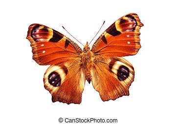 vlinder, pauw