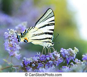 vlinder, profiel, open, vleugels, bloem, groot