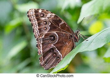 vlinder, profiel, verticaal