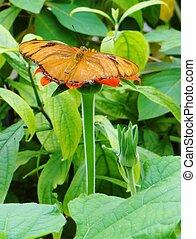 vlinder, propageren, jouw, vleugels
