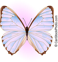 vlinder, roze, blauwe