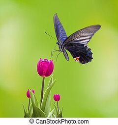 vlinder, tulpen